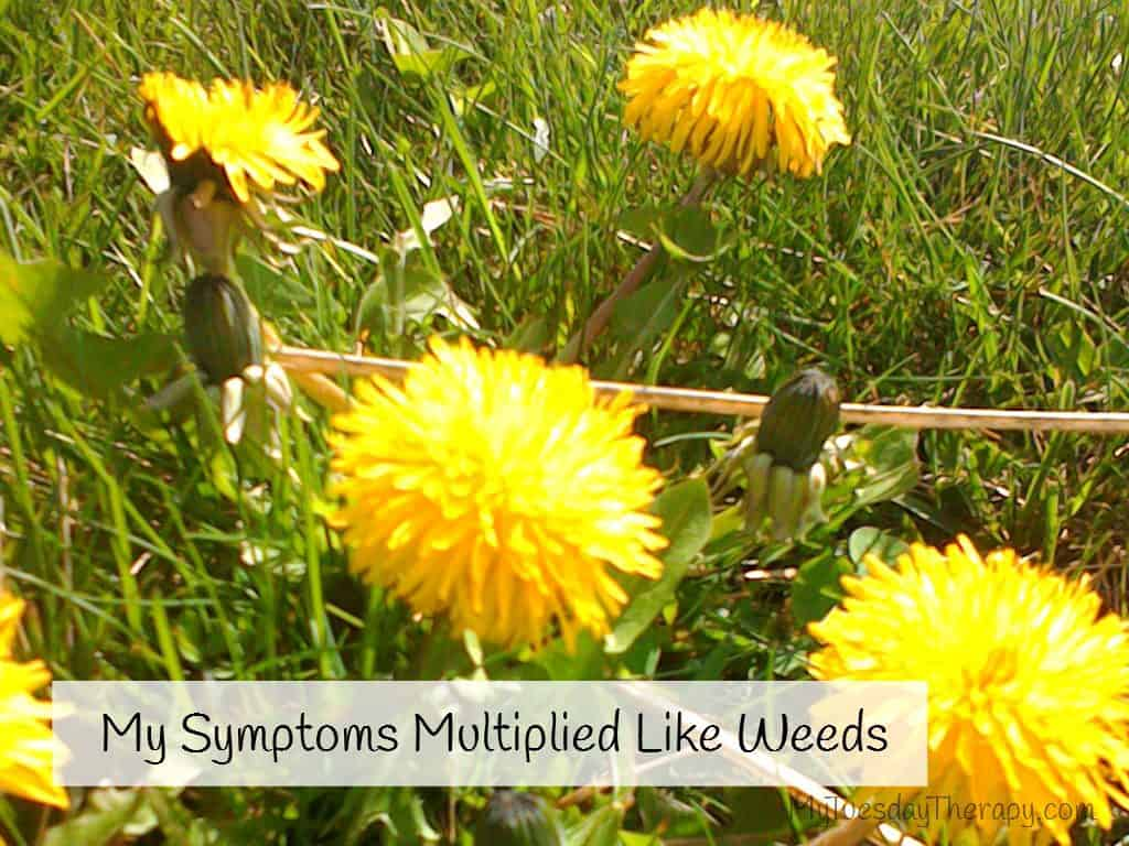 Dandelions. My Adrenal Fatigue Symptoms Multiplied Like Weeds