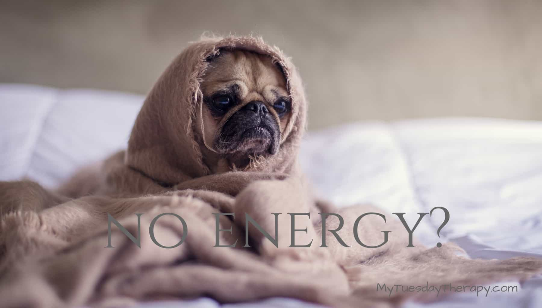 This Dog Wants to Stay In Bed. Do you Lack Energy too?