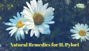 Best Natural Remedies for H. Pylori.