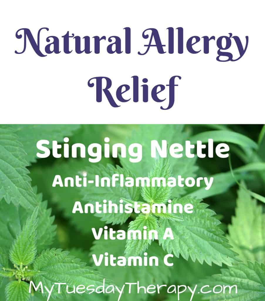 Natural Allergy Relief: Stinging Nettle. Anti-inflammatory, antihistamine, vitamin a and c. (image: stinging nettle)